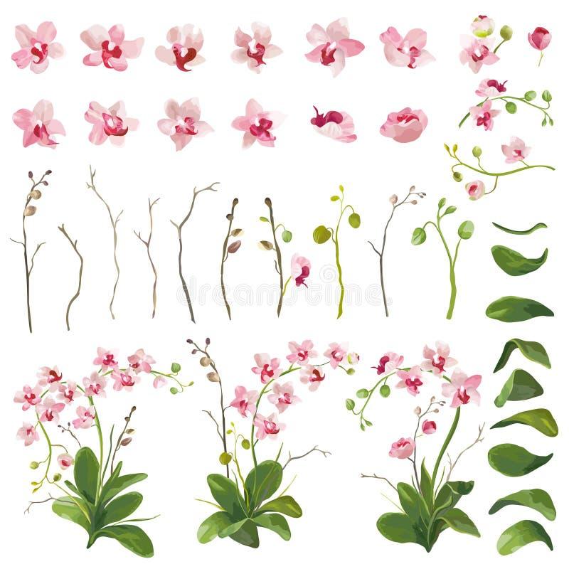 Éléments floraux de fleurs tropicales d'orchidée dans le style d'aquarelle illustration de vecteur
