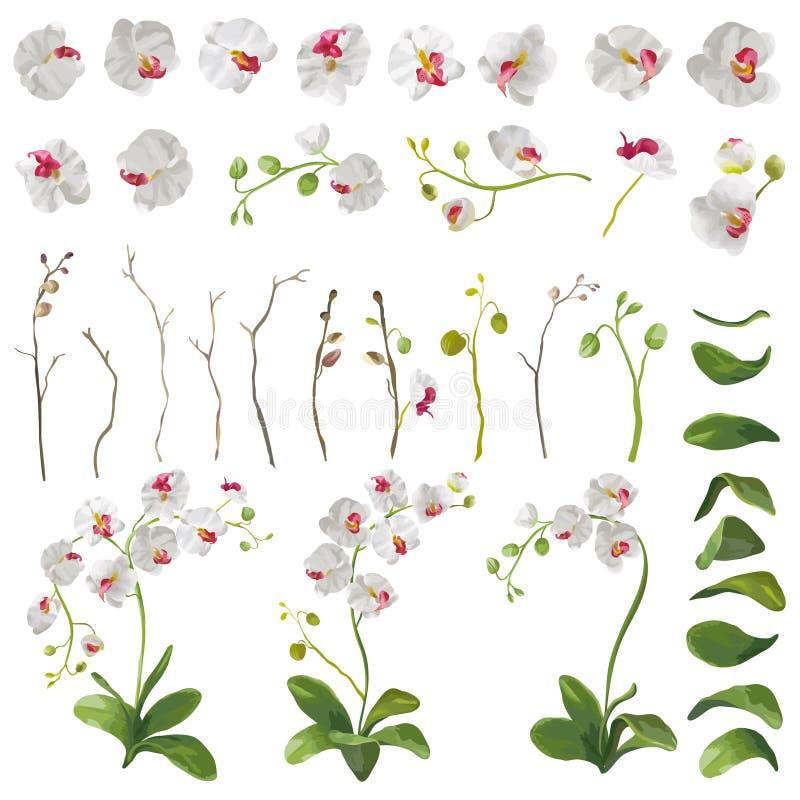 Éléments floraux de fleurs tropicales d'orchidée dans le style d'aquarelle illustration libre de droits