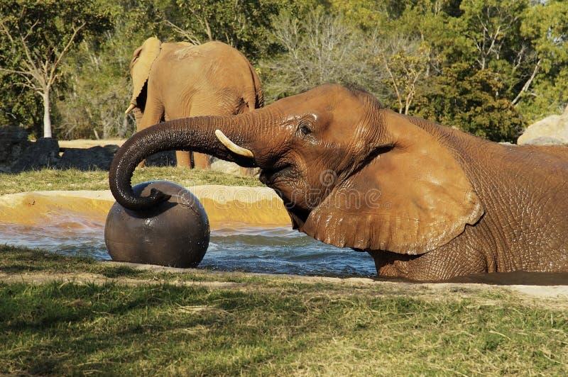 Éléphant 3 Image stock