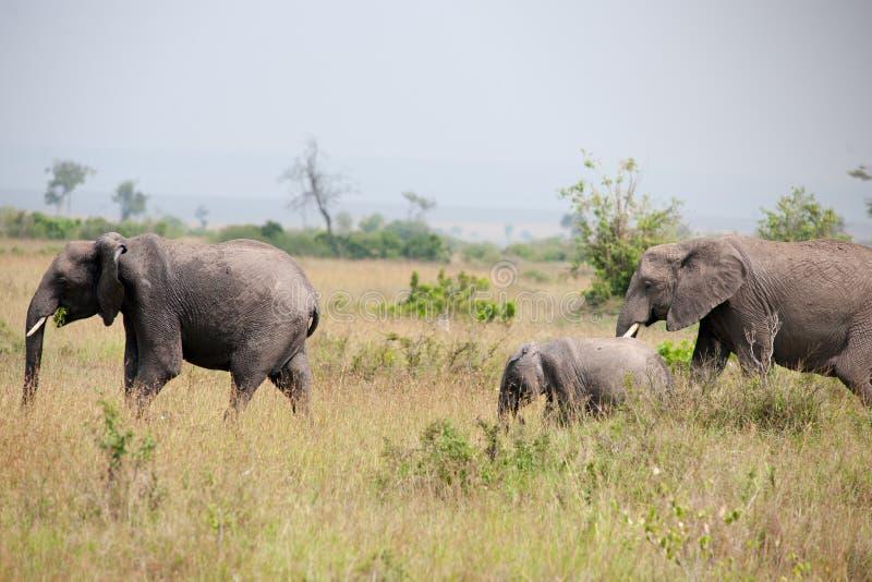 Download Éléphant image stock. Image du désert, afrique, ivoire - 45354953
