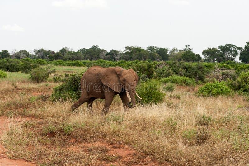 Download Éléphant image stock. Image du vacances, éléphant, danger - 45355595