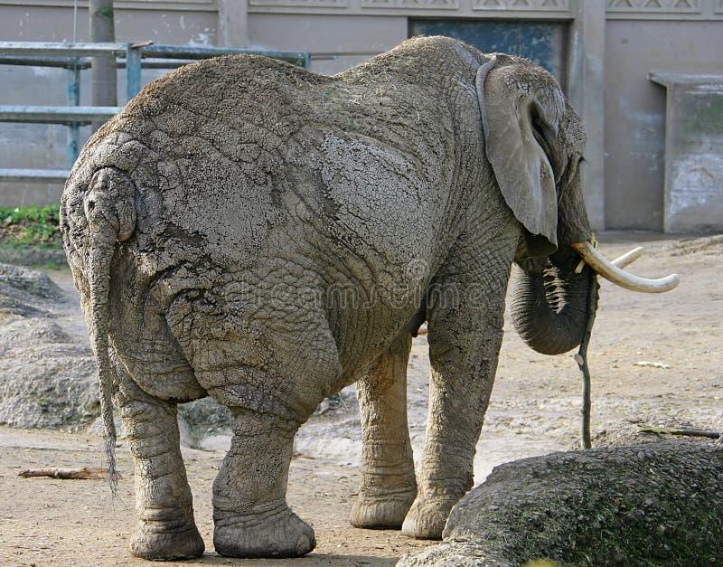 Éléphant 5 photo libre de droits