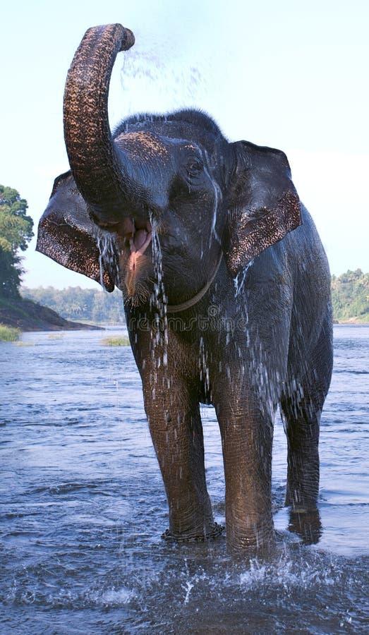 Éléphant 7 images libres de droits