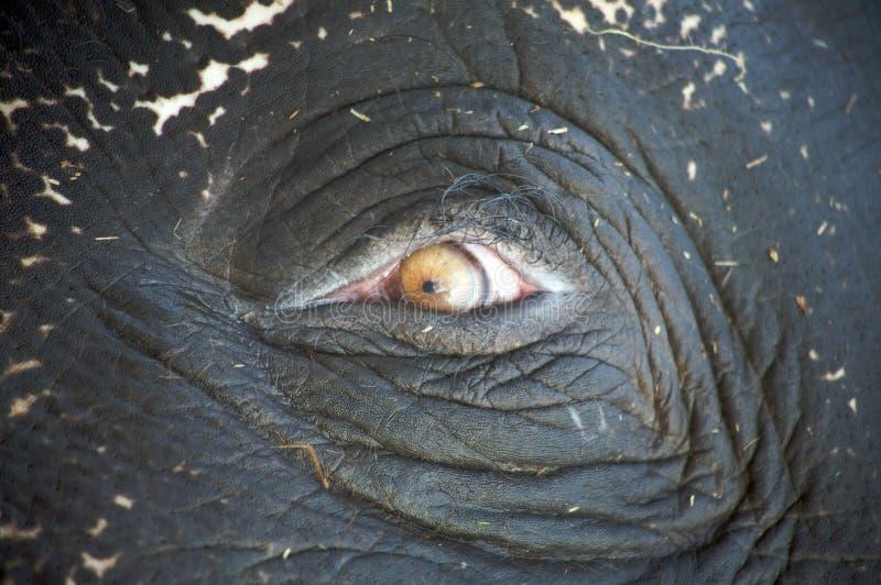 Éléphant 9 photo libre de droits