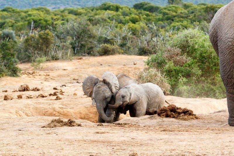 Download Éléphant africain de Bush image stock. Image du sauvage - 77159881