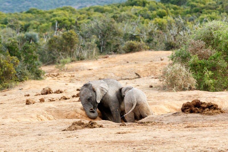 Download Éléphant africain de Bush image stock. Image du défense - 77162613