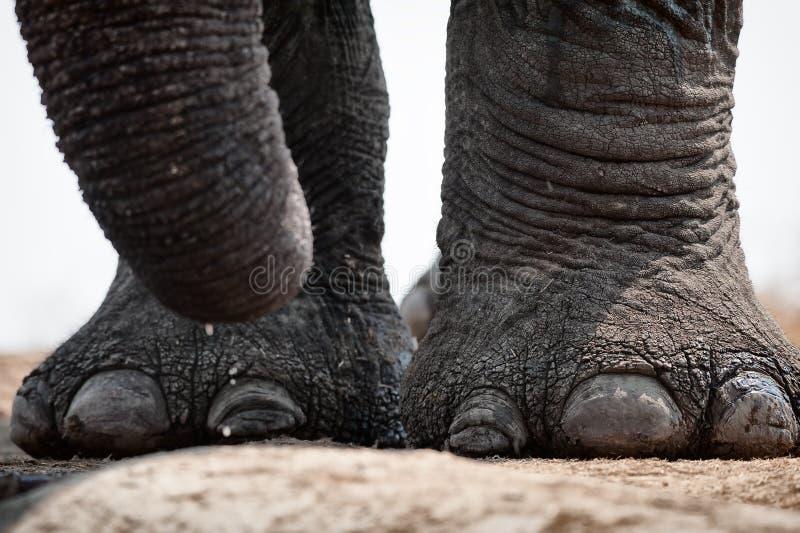 Éléphant au point d'eau photo stock