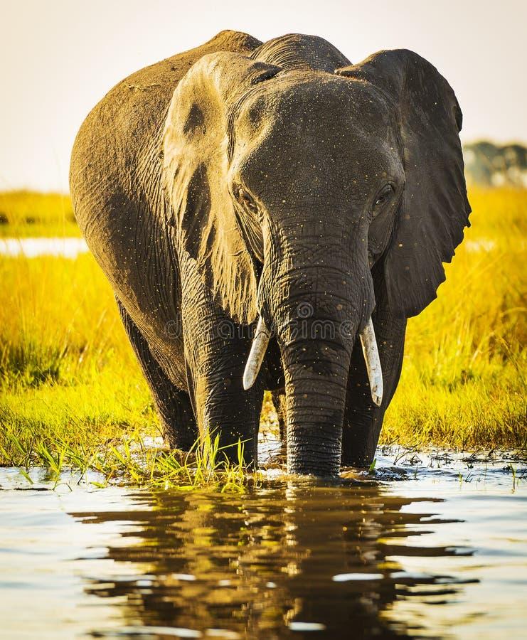 Download Éléphant avec le jet d'eau image stock. Image du stationnement - 77157081