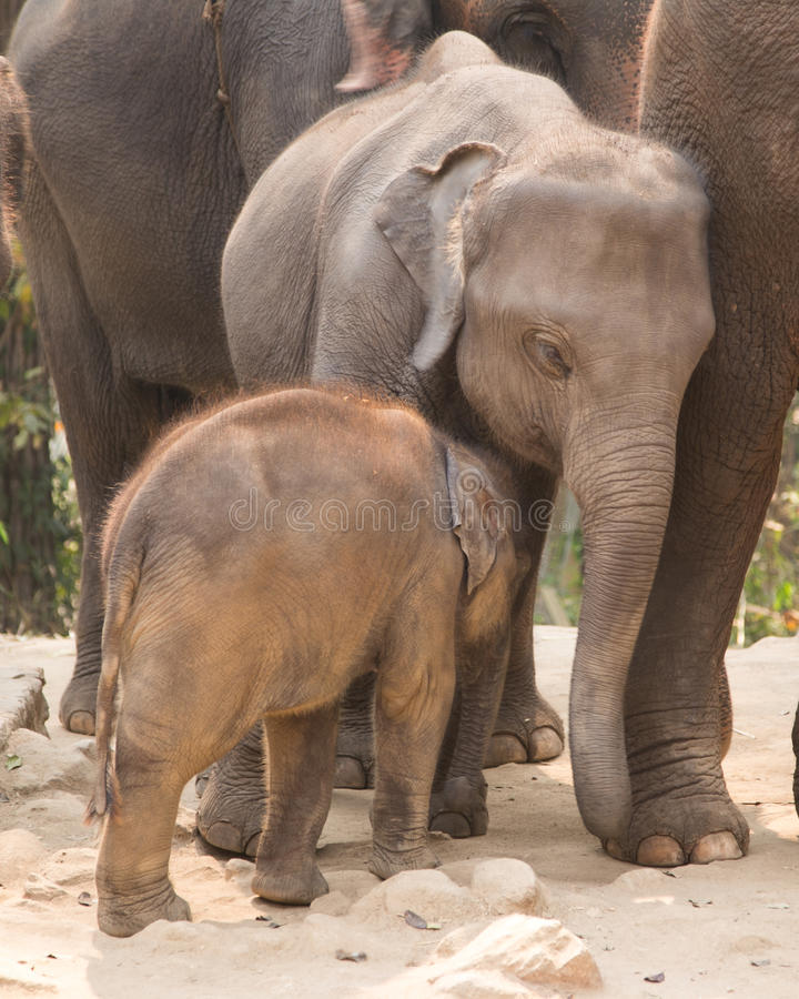 Éléphant câlin de bébé photographie stock libre de droits