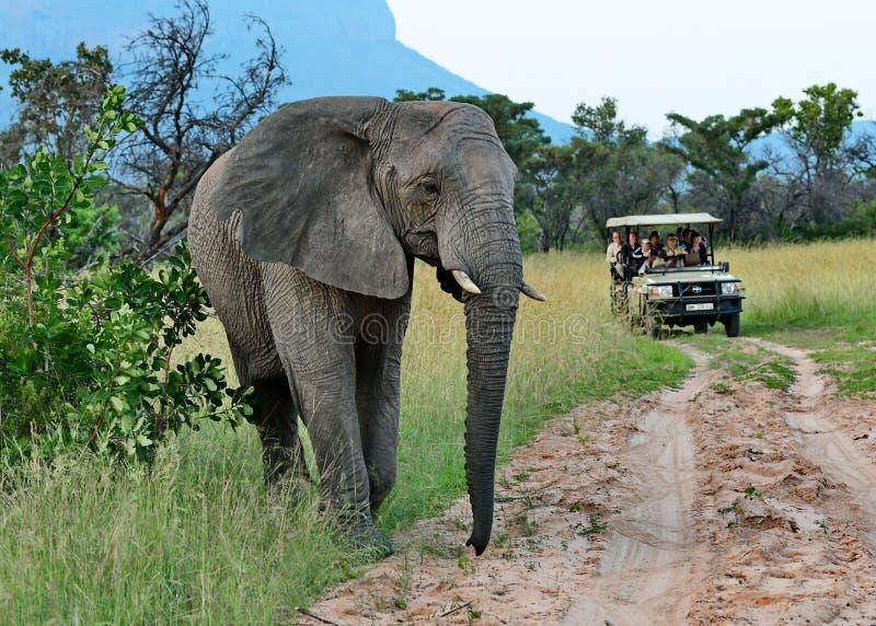 Éléphant croisant le chemin d'un véhicule d'entraînement de jeu sur le safari image libre de droits