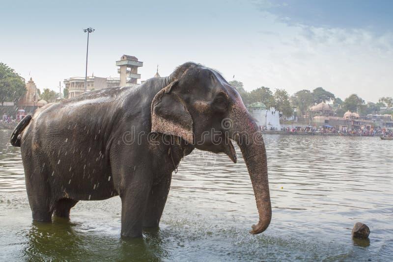 Éléphant d'Asie photographie stock libre de droits