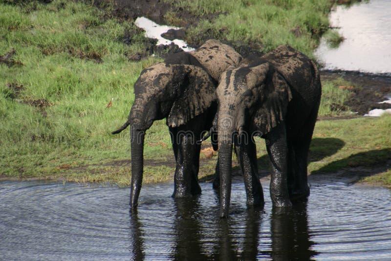 Éléphant dans le bain photo stock