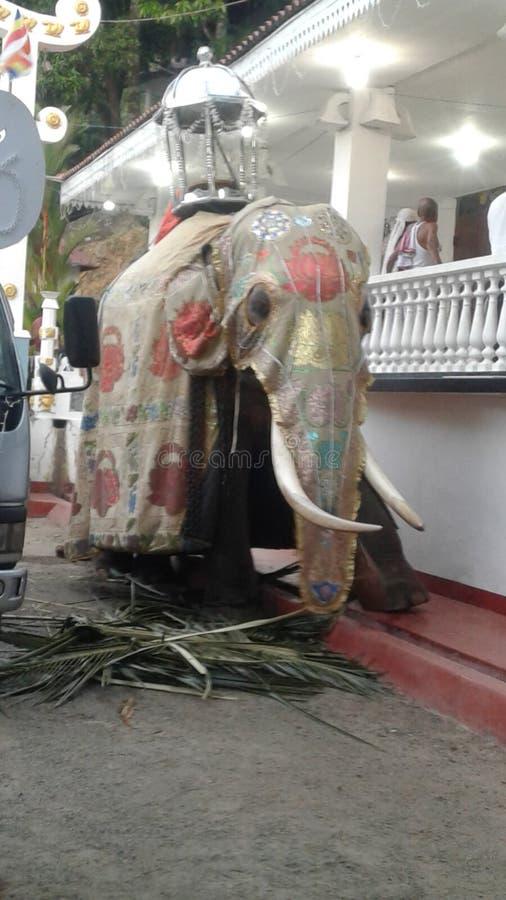 Éléphant dans le temple de maniyangama du Sri Lanka Maniyangama images libres de droits