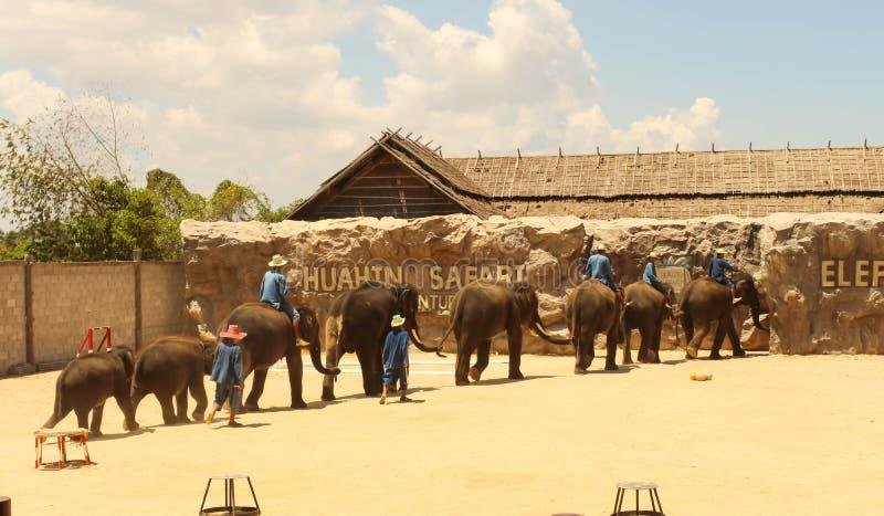 Éléphant de groupe d'Éditorial-exposition sur le plancher dans le zoo photo libre de droits