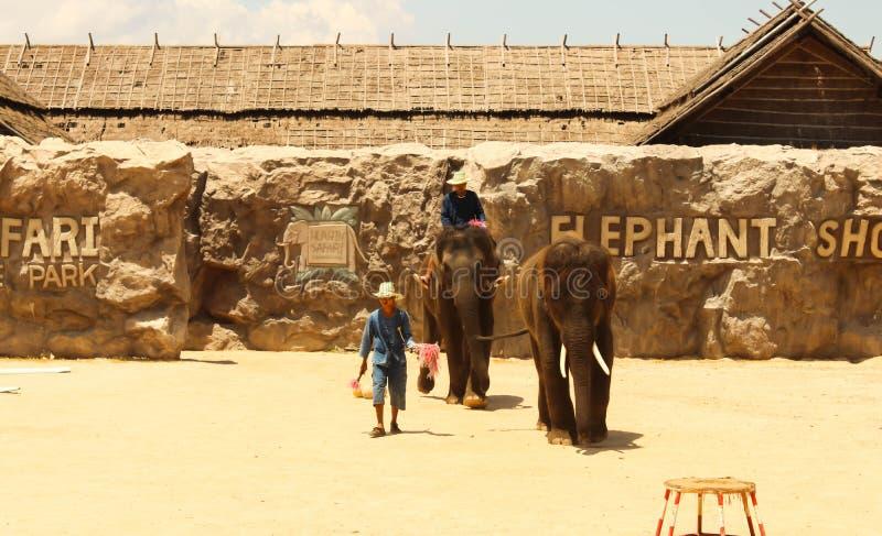 Éléphant de groupe d'exposition d'Editorial-2nd sur le plancher dans le zoo images libres de droits