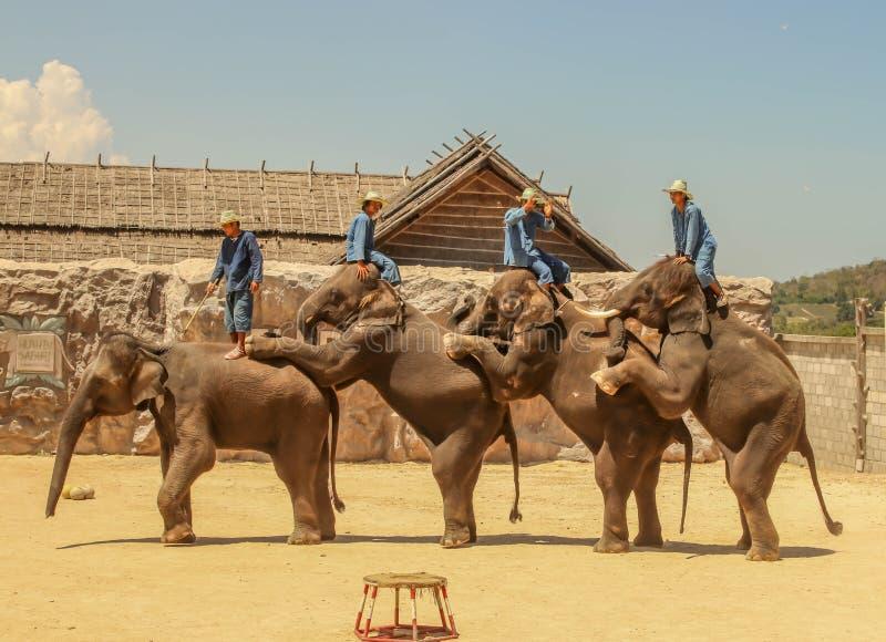 Éléphant de groupe d'exposition d'Editorial-3rd sur le plancher dans le zoo photographie stock libre de droits