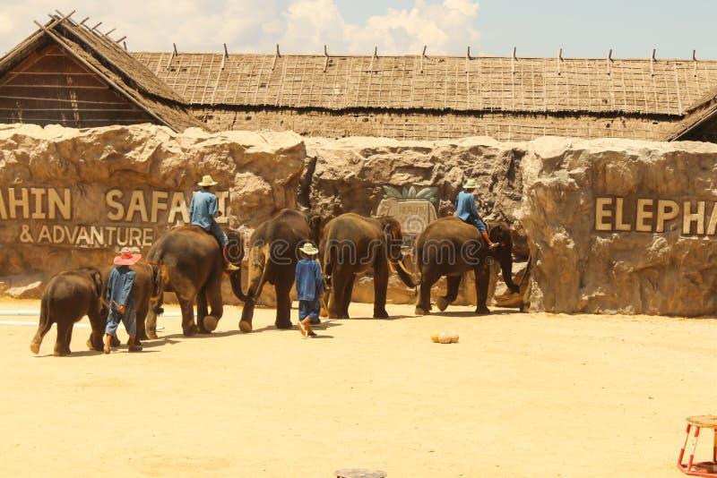 Éléphant de groupe d'exposition d'Editorial-1st sur le plancher dans le zoo images libres de droits