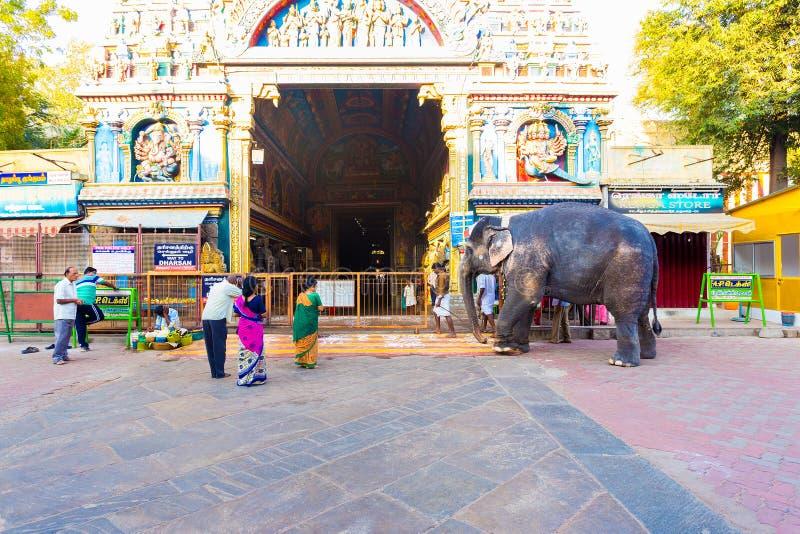 Éléphant de passage de temple de Madurai Meenakshi Amman image libre de droits