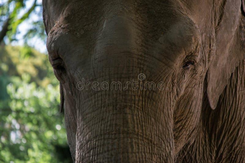Éléphant de stationnement dans le zoo de Mysore photographie stock