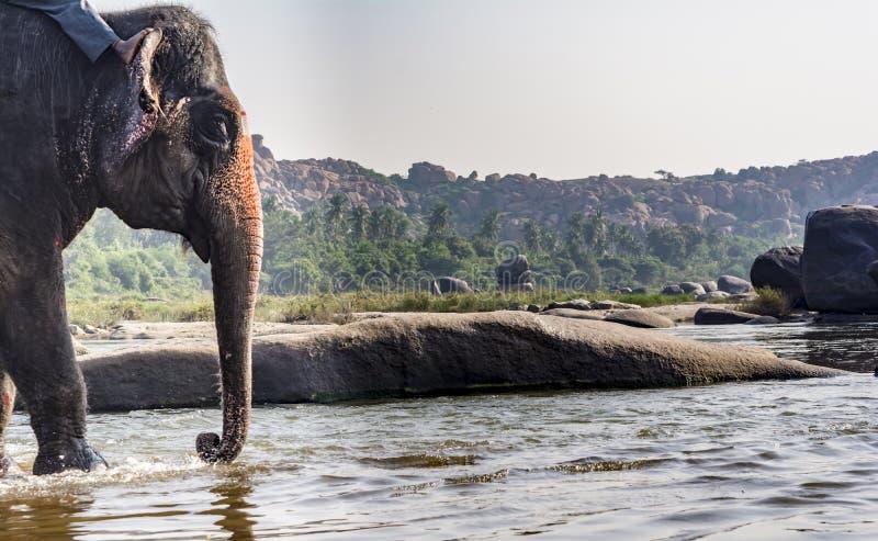 Éléphant de temple environ pour prendre Bath de rivière image libre de droits