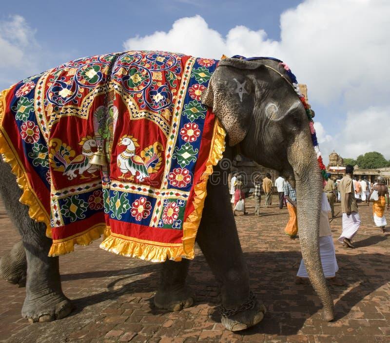 Éléphant de temple - Thanjavur - Inde images stock