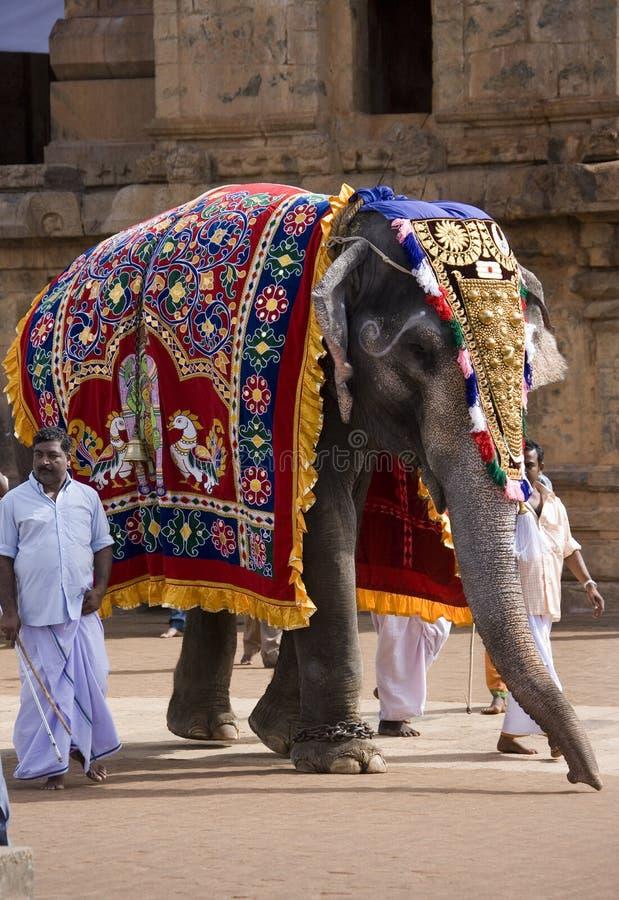 Éléphant de temple - Thanjavur - Tamil Nadu - Inde image libre de droits