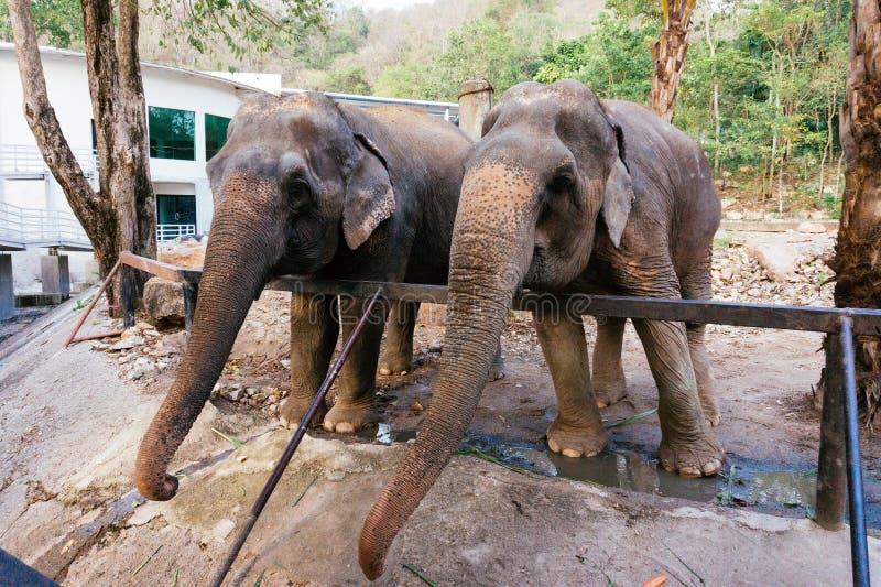 Éléphant de thaïlandais image stock
