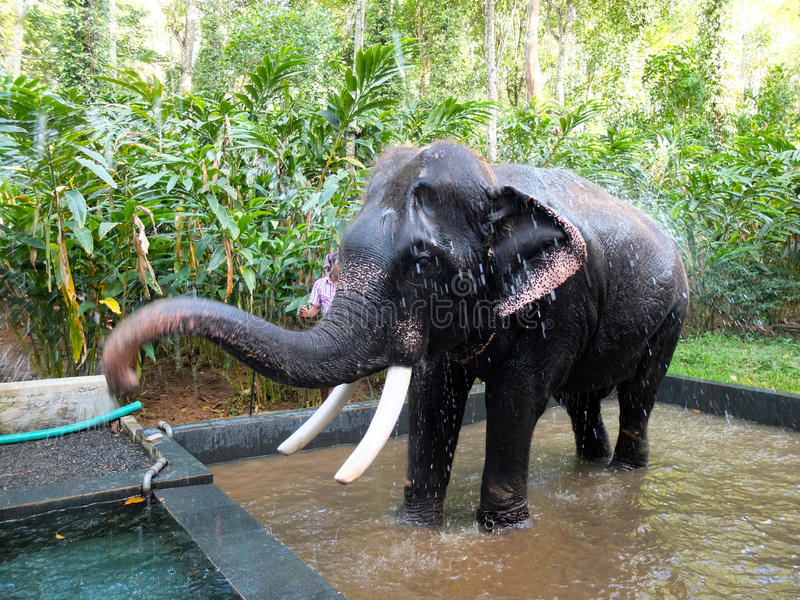 Éléphant de travail, Kerala, Inde photos libres de droits