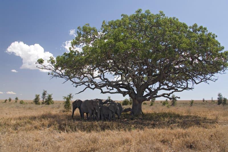 Éléphant des animaux 050 images libres de droits