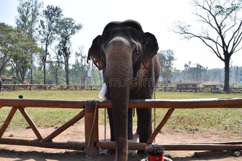 Éléphant en atmosphère fraîche dans le coorg photographie stock libre de droits