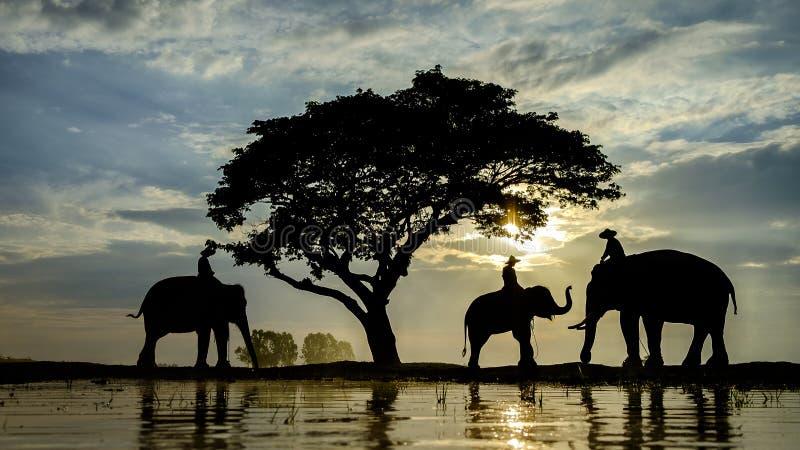Éléphant et mahout de silhouette au lever de soleil photographie stock