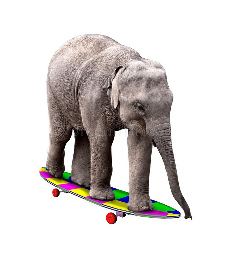 Éléphant faisant de la planche à roulettes photographie stock
