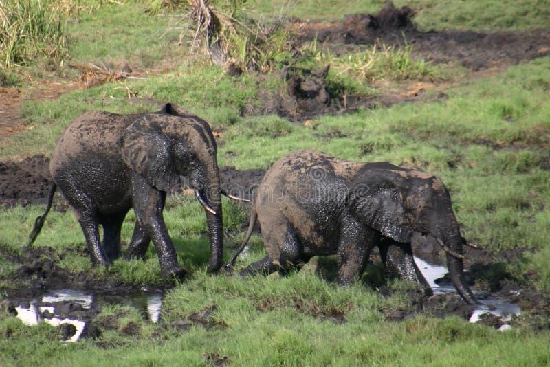 Éléphant jouant dans la boue photo stock