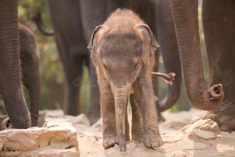 éléphant mignon de chéri image stock