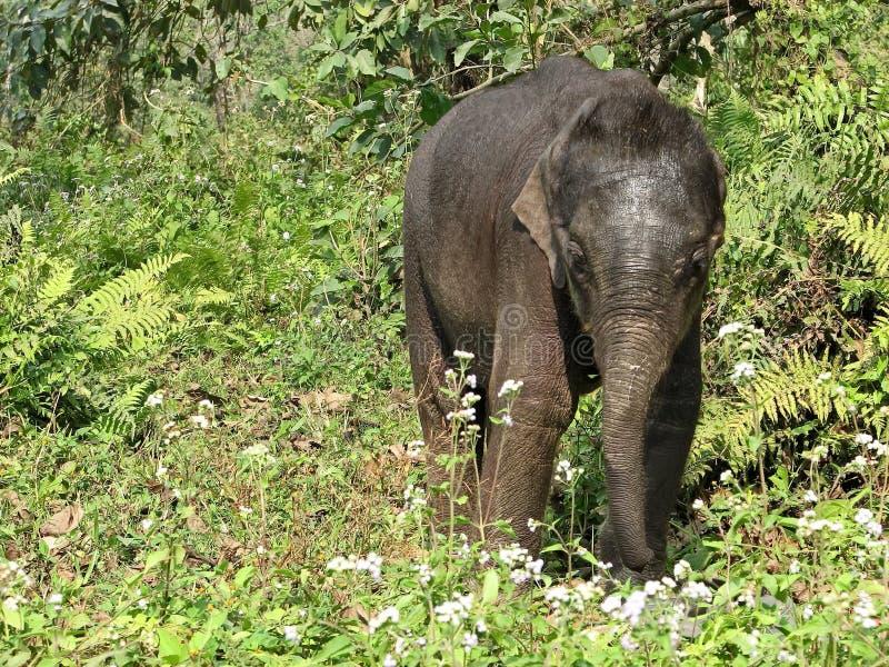 Éléphant nouveau-né drôle de bébé Premières étapes et explorer le monde images libres de droits