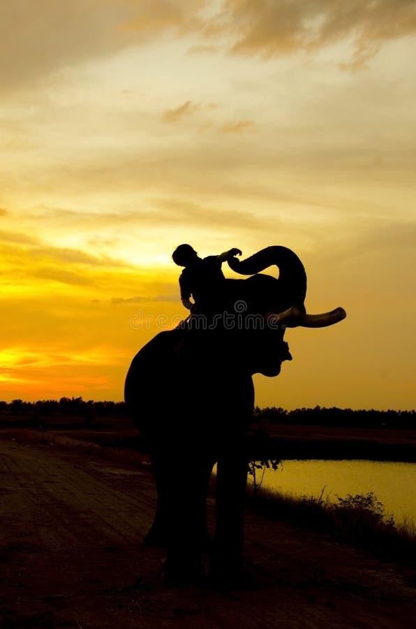 Éléphant se tenant dans un domaine de riz avec le mahout image stock