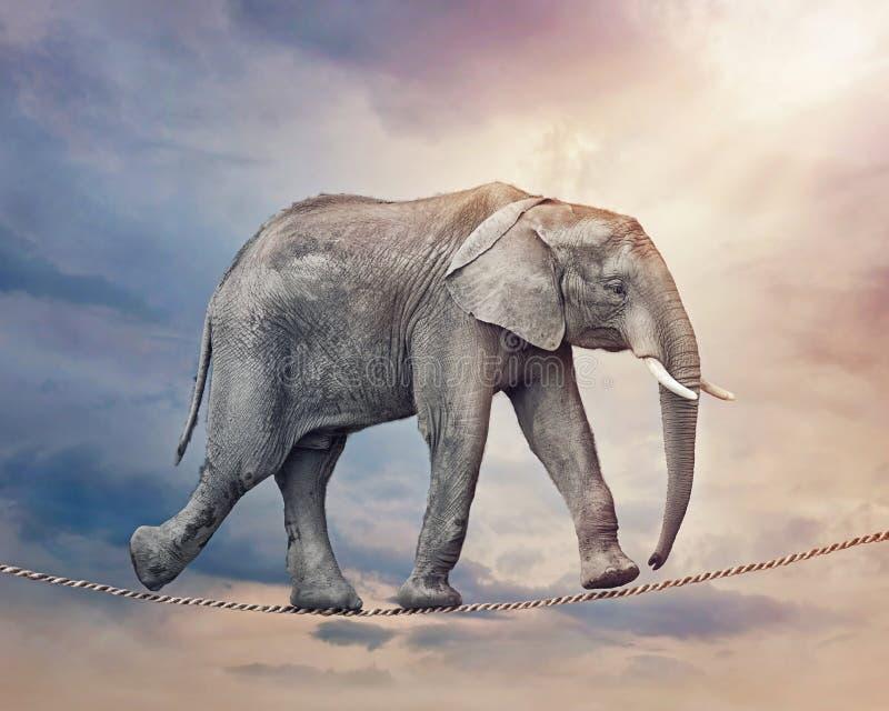 Éléphant sur une corde raide illustration de vecteur