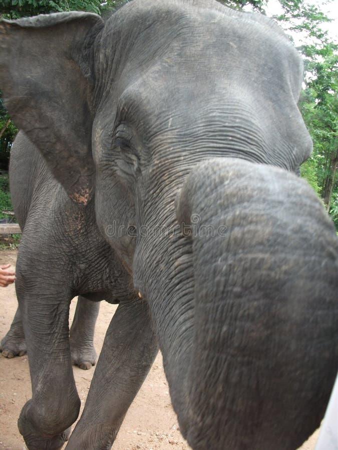 Éléphant Thaïlande photographie stock libre de droits