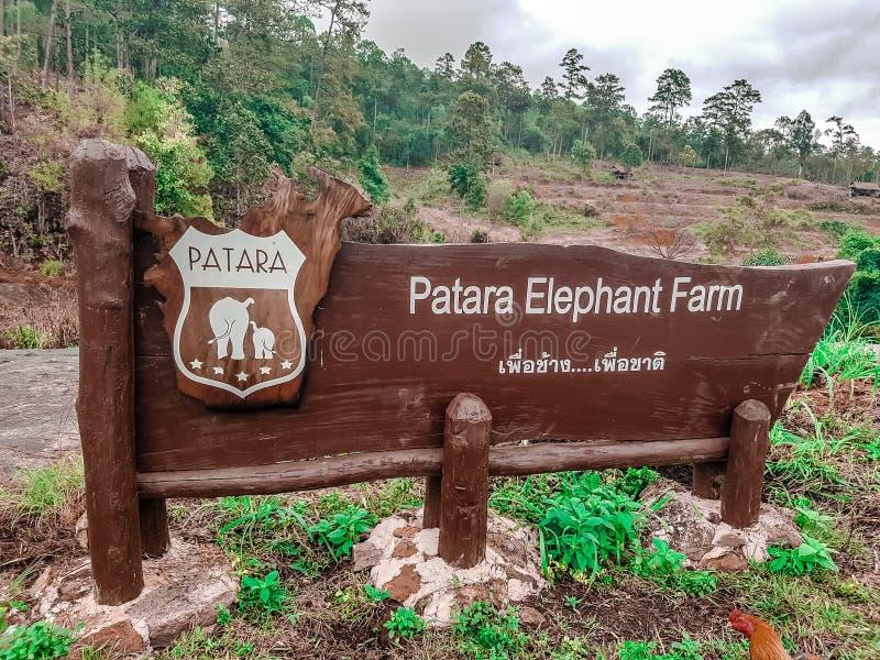 Éléphants à la ferme d'éléphant de Patara, Chiang Mai, Thaïlande photos libres de droits