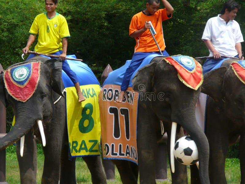 Éléphants étant prêts pour jouer au football photographie stock