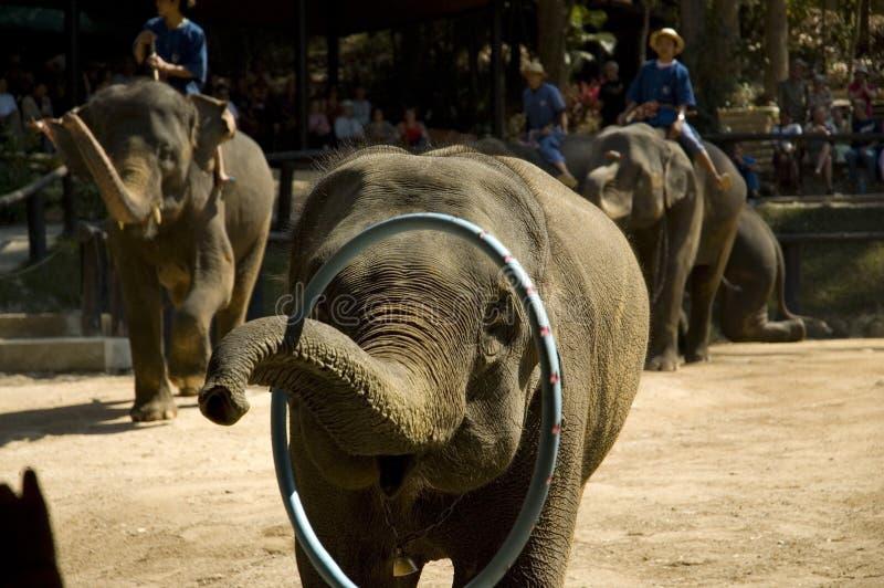 Éléphants d'économie image libre de droits