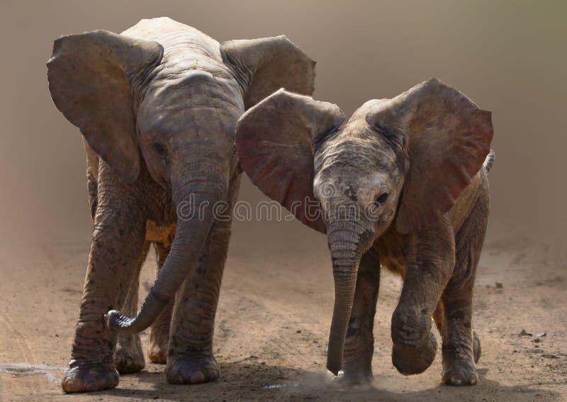 Éléphants de bébé photo stock
