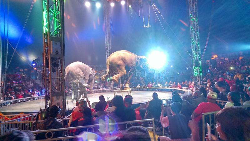 Éléphants de cirque photos libres de droits