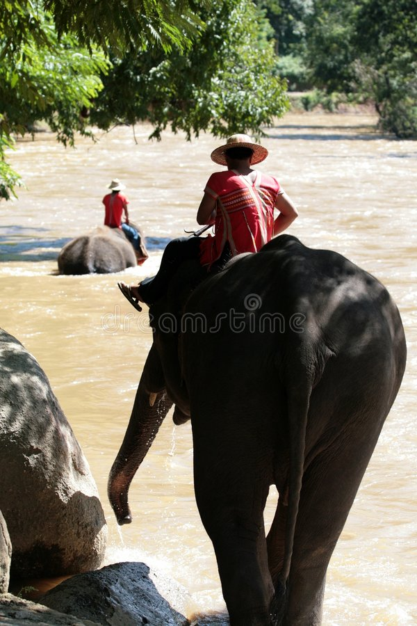 Éléphants descendant ! photographie stock
