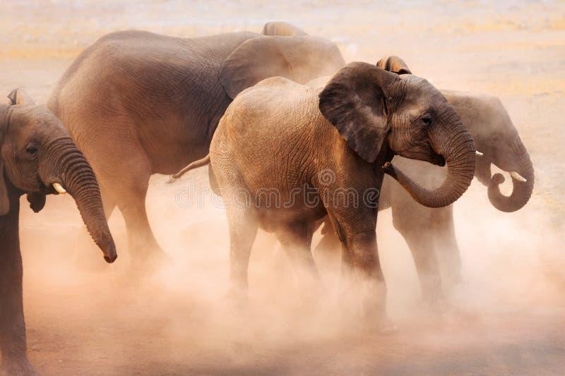 Éléphants en poussière photographie stock libre de droits