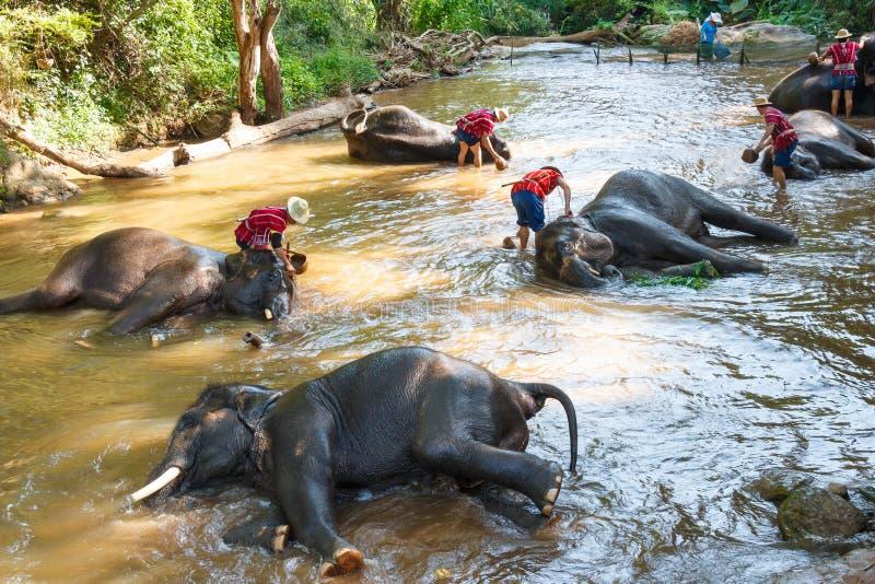 Éléphants thaïlandais prenant un bain avec le mahout photo libre de droits