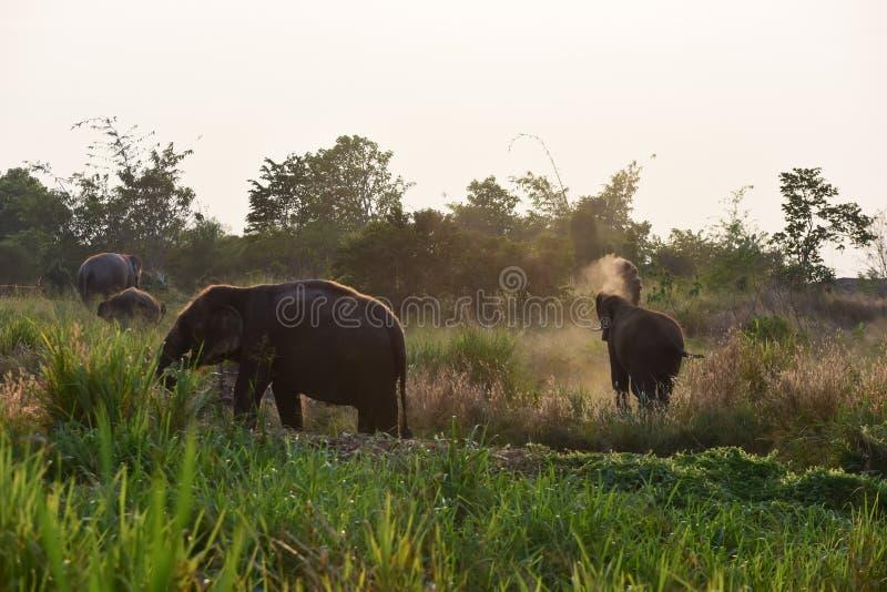 Éléphants thaïs image libre de droits