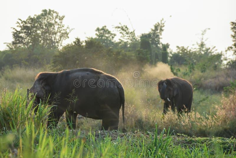 Éléphants thaïs images libres de droits