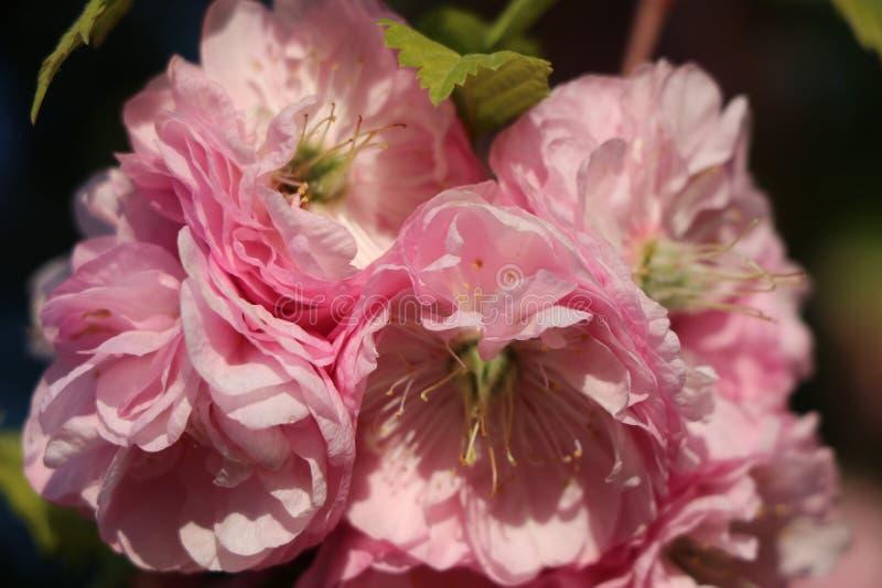 Él que las rosas de los amores deben aguantar las espinas fotos de archivo libres de regalías