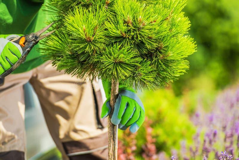 Élagage d'arbres de jardin photo stock